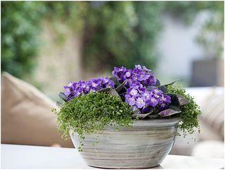 Hírlevél 4 - Ültess virágot