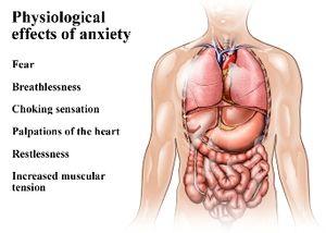Hogyan változtatja meg testünk működését a stressz? - stressz válasz, álmatlanság, gyomorgörcs, gombócérzés